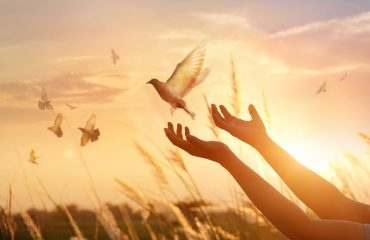 Woman praying and free bird enjoying nature on sunset background, hope concept for forgiveness